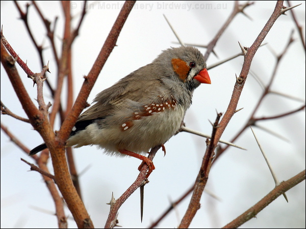 Zebra finch housing zebra finch housing 28 images zebra for Should i buy a house with polybutylene pipe