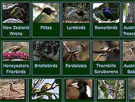 Thumbnails of Australian Passerines